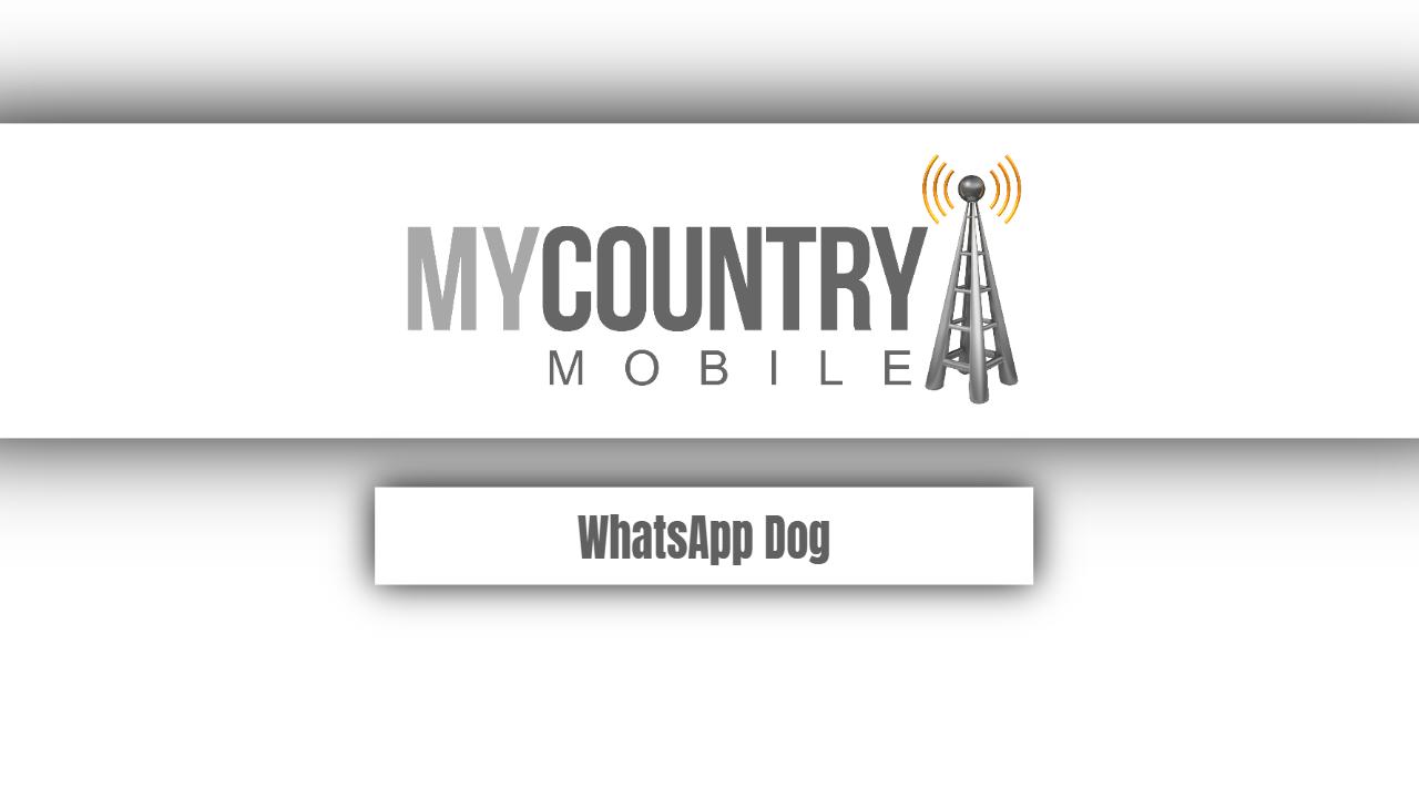 WhatsApp Dog